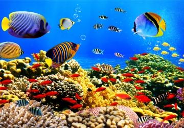 Mẫu tranh dán tường cảnh biển mã:63