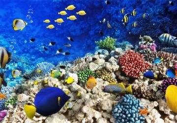 Mẫu tranh dán tường cảnh biển mã:65