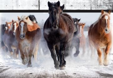 Mẫu tranh ngựa mã đáo thành công mã: 09