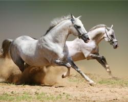 Mẫu tranh ngựa mã đáo thành công mã: 34